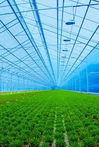 Tại sao nên chọn tấm lợp nhựa thông minh cho nhà kính nông nghiệp?